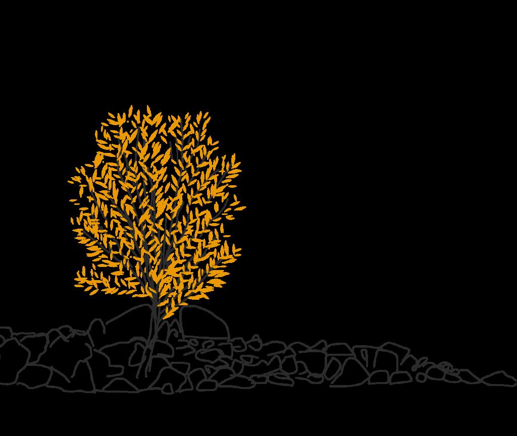 Luwiss values - tree illustration in fall